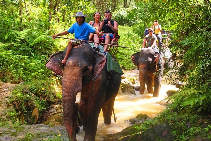 Khao Lak Info: Abenteuerliche Holzbrücken und verwunschene, kleine Pfade führen durch das Dickicht und machen Lust auf eine Safari. (#02)
