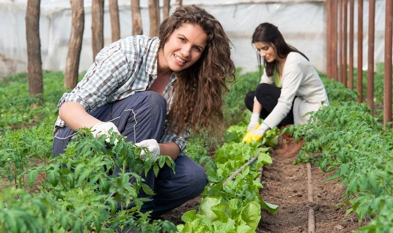 Und noch eine Idee: Wie wäre es mit einem Praktikum für Schüler auf dem Bauernhof? ( Foto: Shutterstock-_Vlad Teodor)